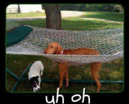 Dog Stuck in Hammock This isn't as relaxing as everyone says.