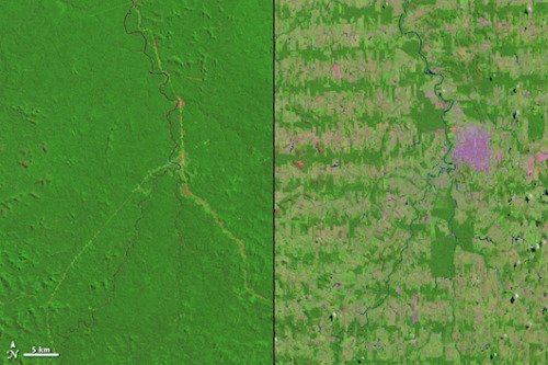 mothernaturenetwork:  Satellite photos show Amazon vanishingClear-cutting for roads and agriculture has transformed the Amazon rain forest in western Brazil, as a new set of satellite images from NASA illustrates.