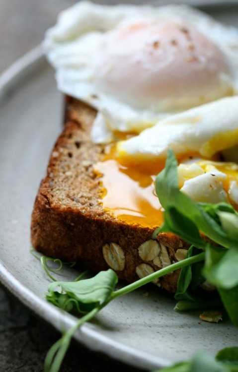 squaremeal:  (via say eggs / .)