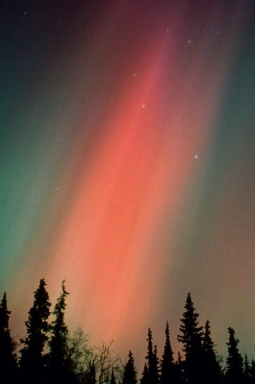 can I just go to alaska to see the northern lights already?
