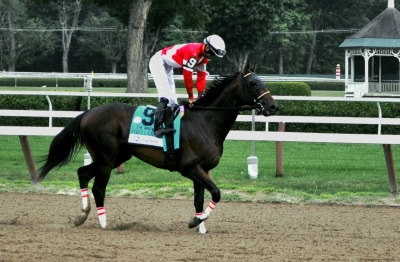 Fort Larned gets ready to do some serious business in the Whitney post parade (Photo by Dawna Wood/GallopingHatRack.com)
