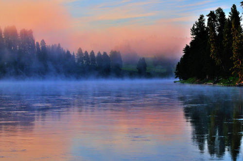 dearscience:  Early Morning Fog on the Yellowstone