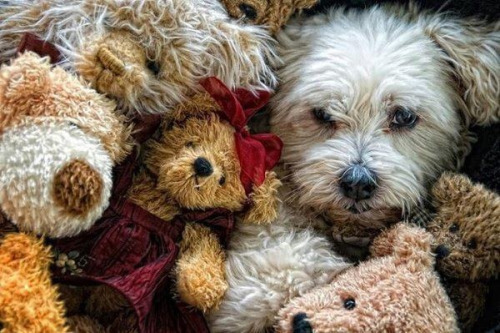 Can you find the real furbaby?☺