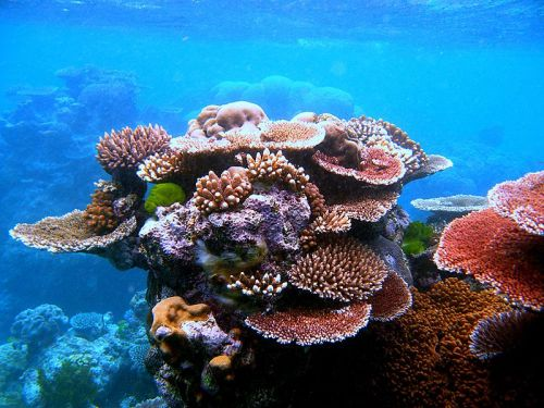 Great Barrier Reef by Toby Hudson, via Creative Commons from: Top 5 Australia Ecotourism Destinations