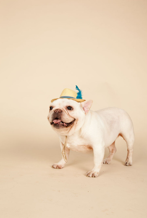 littlebunninotail:  © Angela Hopper Photography and the Canvas Dog studio