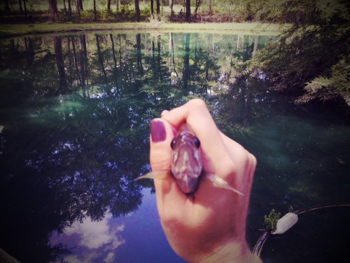 brookehatfield:  How to Get a Brim off a Hook For the How-To Issue Congratulations! You've gone fishing and managed catch yourself a bluegill, known to rednecks everywhere as a brim. We will now embark on a physical and spiritual journey to get it off the hook so that you can revel in applause from your big-city travel companions and that squirrel that's been hanging out by the picnic table all morning, maybe. 1. This type of fish is usually pretty small, rarely larger than an average-sized human hand. Go ahead and balance the handle of your fishing rod on a stable surface (like the ground, if you aren't on a fault line), and take hold of the line right above the hook. If it's a brim of any gumption, the fish will struggle a bit, so wait for it to stop wiggling before attempting to de-hook. Yes, I guess if you're not used to it a live fish is kind of a squirmy, slimy chunk of scary nature. But you knew what this was; take a deep breath, remember that we're all chunks of scary nature of a certain kind, and proceed. 2. Once the fish wears itself out, slide your hand down around