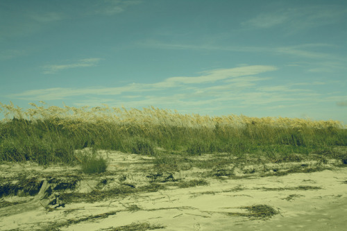 The beautiful sea oats and dunes at low tide on Sullivan's Island.