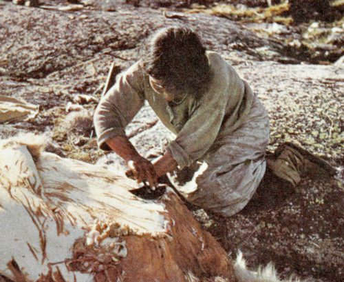 "Unidentified Inuit woman cleaning a polar bear skin. ""Innusivut / Our Way of Living"" Place Unknown, N.W.T. [Nunavut], 1952? Photographer:unknown. Credit: Library and Archives Canada / e004413808 Source"