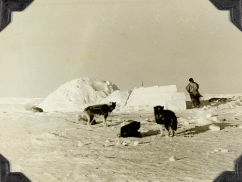 "Three Husky dogs and one unidentified Inuk in front of an igloo. ""Typical family groups in the winter season, Chesterfield Inlet, N.W.T."" Chesterfield Inlet, N.W.T., [Chesterfield Inlet (Igluligaarjuk), Nunavut], 1952 Credit: James Vinton Stowell / Library and Archives Canada / e004413818 Source"