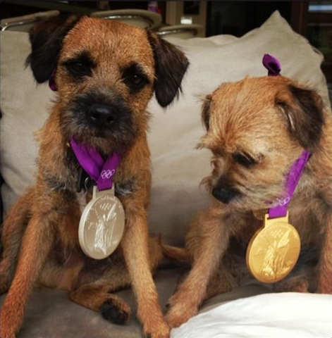 designoclock:  Andy Murray's dogs wearing his recent Olympic winnings