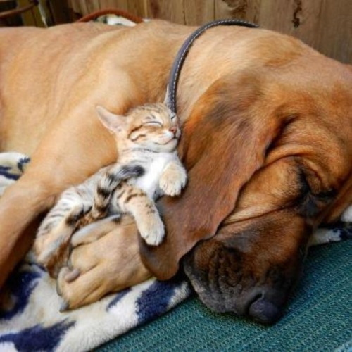 Love is Love, and Cute is Cute via:cutestpaw. Todays Cuteness:)