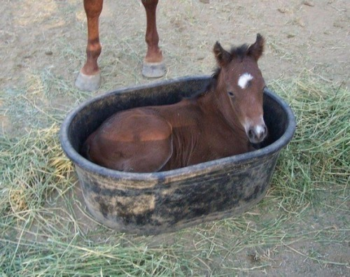 If it Fits…via:cutestpaw. For the Horse Lovers:)