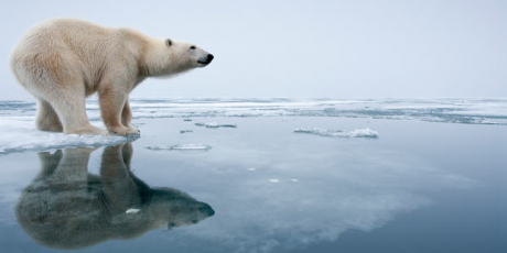 Save The Arctic | Salvemos el Ártico¡Apoya!