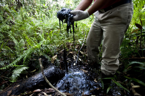 "thepeoplesrecord:  In other Chevron news: Chevron faces deadline in $19 billion Ecuador caseAugust 7, 2012 U.S. oil giant Chevron has until midnight tonight to pay a US $19.04 billion Ecuador court judgment for polluting Amazon waterways or officially default and face another lawsuit to seize its assets, this time in Ecuador. Such collection lawsuits are pending against Chevron in Canada and Brazil. Ecuador Judge Liliana Ortiz on Friday signed an order giving Chevron until midnight tonight to deposit the funds necessary to remediate the oil contamination, which included the dumping of more than 16 billion gallons of toxic waste from oil production into Amazon waterways. Judge Ortiz's order comes after almost 19 years of litigation. The case, Aguinda v. ChevronTexaco, began on November 3, 1993 when 30,000 indigenous people and farmers from Ecuador's Amazon filed a class action suit against Texaco in New York federal court alleging massive oil contamination of the rainforest. For 10 years, Texaco argued before U.S. judges that the case should be transferred to Ecuador's courts. In 2002, a U.S. federal judge granted Texaco's motion and removed the case to Ecuador on the condition that Texaco submit to jurisdiction there and be bound by any ruling of the Ecuadorian courts. In the meantime, Chevron bought Texaco in 2001, assuming its liabilities and defense of the case. Texaco operated in Ecuador from 1964 to 1992, building hundreds of oil production facilities. The trial judge in Lagio Agrio found overwhelming evidence that the company dumped billions of gallons of toxic waste into Amazon waterways as a cost-saving measure. Five indigenous groups in the area have been harmed by the pollution that covers an area the size of Rhode Island. The contamination also caused an outbreak of cancer that has killed or threatens to kill thousands of people in the area, according to evidence before the court. Judge Ortiz's order is the final step under Ecuador civil procedure to certify the 188-page trial court judgment, which was issued on February 11, 2011. That judgement was unanimously affirmed on appeal in early January. It set the amount of the judgment at $18.2 billion. Last week, Judge Ortiz raised the final amount of the award to $19.041 billion after calculating various mandatory costs required by Ecuador law. Chevron stripped most of its primary assets, including service stations, from Ecuador years ago and the company no longer operates in the country. Pablo Fajardo, the lead Ecuador lawyer on the case, says that for practical purposes, Judge Ortiz's order allows the rainforest communities to execute the Ecuador judgment against Chevron's remaining assets in their home country. Fajardo estimates Chevron's remaining assets in Ecuador are worth roughly $200 million, including a $96 million court judgment the company won recently in an international arbitration proceeding against Ecuador's government. Judge Ortiz's order also puts the plaintiffs in a stronger legal position to pursue recognition of the Ecuador judgment abroad under various international treaties and domestic law statutes. Collection lawsuits are pending against Chevron in Canada and Brazil, where the company has billions of dollars worth of assets. The plaintiffs are asking courts to seize to seize these assets to satisfy the judgment and finance a cleanup of the oil contamination, said Fajardo. ""People in Ecuador are dying because of Chevron's pollution and company's utter contempt for the rule of law,"" said Fajardo. ""Chevron is going to have to be forced by courts to comply with its legal obligations."" Chevron maintains the plaintiffs' allegations that it is responsible for alleged environmental and social harms in the Oriente region of Ecuador are ""false.""  Chevron says the company never conducted oil production operations in Ecuador, and its subsidiary Texaco Petroleum Co. (TexPet) ""fully remediated its share of environmental impacts arising from oil production operations, before leaving Ecuador in 1992."" ""After the remediation was certified by all agencies of the Ecuadorian government responsible for oversight, TexPet received a complete release from Ecuador's national, provincial, and municipal governments that extinguished all claims before Chevron acquired TexPet in 2001,"" the company says. ""All legitimate scientific evidence exonerates Chevron and proves that the remediated sites pose no significant risks to human health or the environment,"" Chevron says on its website. If Chevron refuses to pay the court judgment, the company will face a greater risk of liability in the enforcement actions already pending, said Karen Hinton, the U.S. spokesperson for the indigenous and farmer plaintiffs. If Chevron defaults, Fajardo said his legal team will file court actions to seize the intellectual property rights of various Chevron brands in Ecuador, including Havoline. Source"
