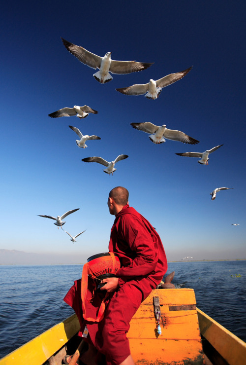 smithsonianmag:    Photo of the Day: A monk and seagulls on Inle Lake, Myanmar.  Photo by: SauKhiang Chau (Bukit Mertajam, Penang, Malaysia); Inle Lake, Shan State, Myanmar