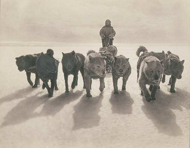Huskies pulling sledge by State Library of New South Wales collection on Flickr.