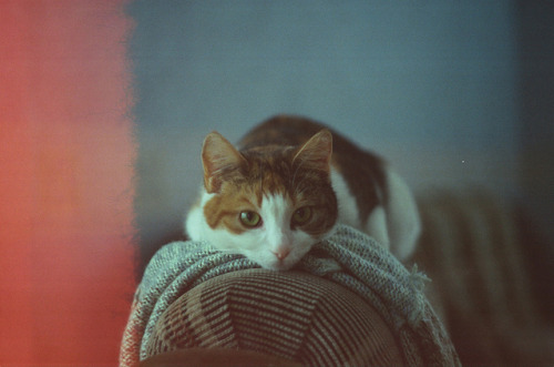 almostlikeadream:  untitled by purplepeepee on Flickr.