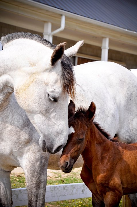 fair-winds-and-all-i-see:  Really, one day old, with his mother, Sweetie. Photograph by Betty Bryant. This is from spring 2011.