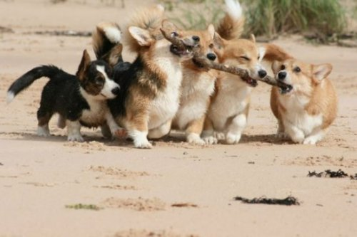 Puppies Play With Stick Mere moments before they were wiped up by a massive wave.