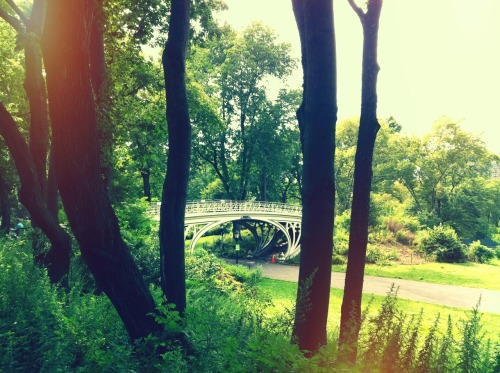 Picturesque bridge in Central Park.