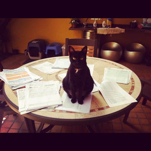 Sometimes Business Cat brings work home. Photo by ©susan yamamoto