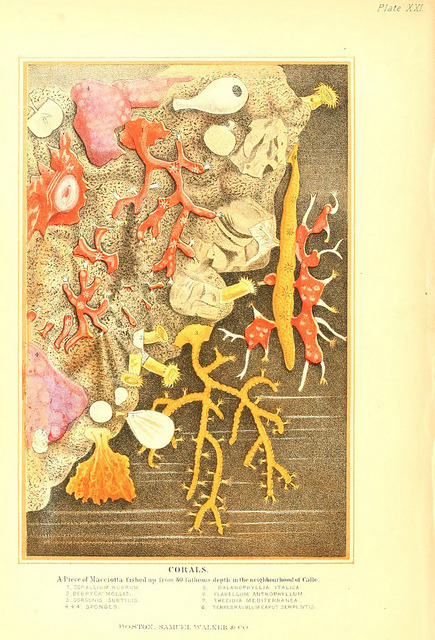 Corals by BioDivLibrary on Flickr. The living world :.Boston :Samuel Walker & Co.,1868-1870, c1868..biodiversitylibrary.org/page/27534977