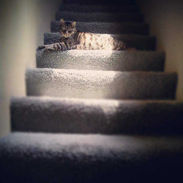 It's like he doesn't want me to go upstairs. #mochakingofthestairs #cat #catlife (Taken with Instagram)