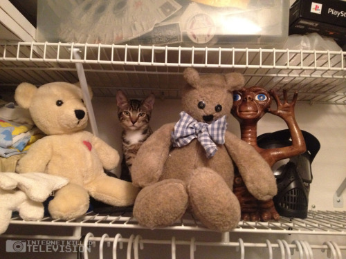 charlestrippy:  Find the kitteh