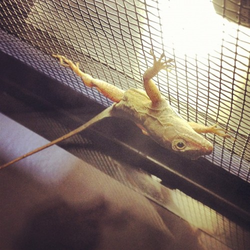 Just hangin out (Taken with Instagram)