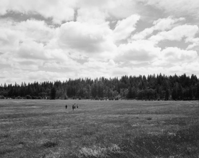 thomashomolya:meadow - 2012