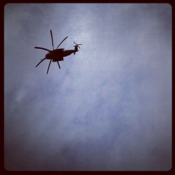 Chopper. (Taken with Instagram)