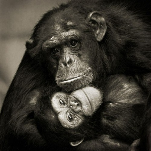 worldlyanimals:  Mother and daughter (Meys Sébastien)