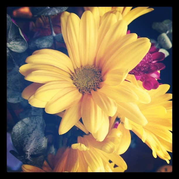 #Flowers #summer #sunflower (Taken with Instagram at Becca Mae's Farm)