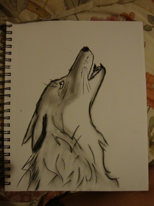 I got bored so I drew a charcoal wolf