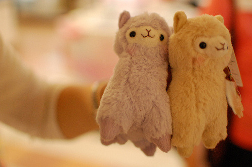 everythinginbetween1218:  OMG. Where can I get a llama toy?!?!