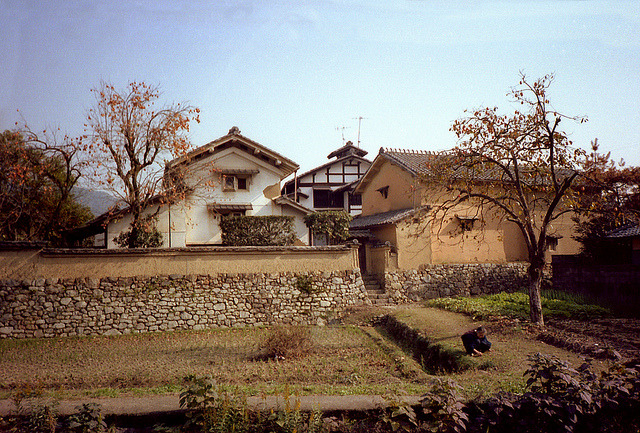 dreams-of-japan:  Iwakura Farm House and Persimmon Tree Fall 1982 by imjackhandy on Flickr.