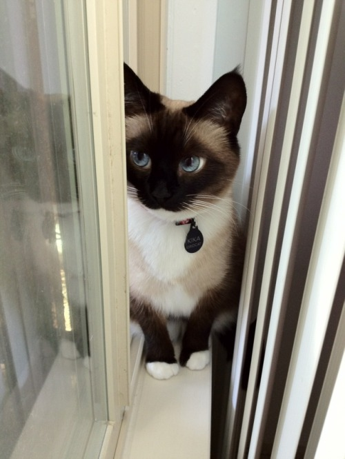 karla-world:  awkward moment when a cat is prettier than you'll ever be
