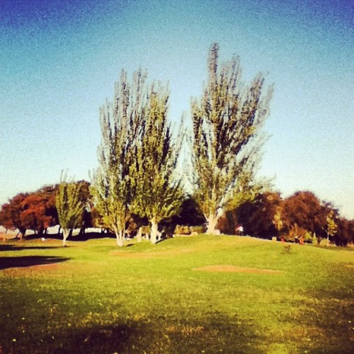 Random trees. #I #took #random #pictures #of #trees #nature #because #I'm #cool #haha #don't #judge #me #lol #California #greenery #field #grass #summer #fun #stuff (Taken with Instagram)