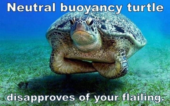 Neutrally buoyant Turtle judges you…