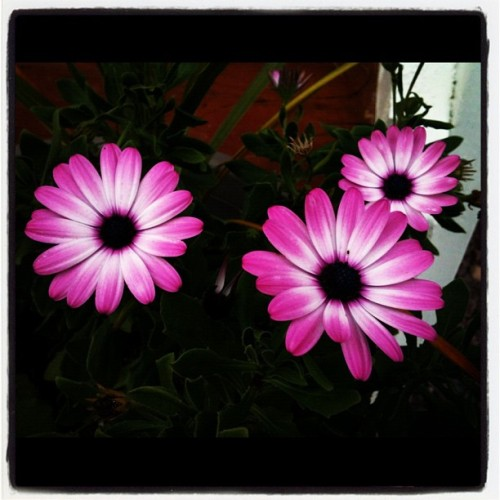 Good morning flowers!  (Taken with Instagram)