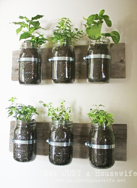 DIY Mason Jar Wall Herb Garden