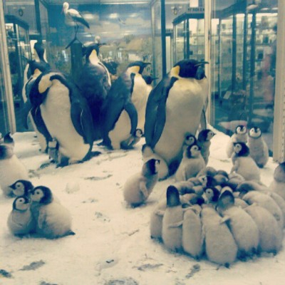 muzzy404:  #penguin #penguins #bird #birds #cool #nice #animal #animals (Taken with Instagram)