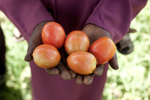 A proud farmer in rural Kenya holds up some of her surplus crop. With the help of an irrigation pump, Lucy is able to feed her family and earn an income. Learn more at www.theadventureproject.org.