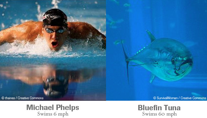 Animals Would Win All The Gold Medals Bluefin Tuna vs. Phelps and other human inadequacies in this great slideshow from The Nature Conservancy. (via Jennifer Ouellette)
