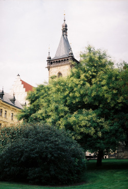 21vines:  Prague (by remaininglight)