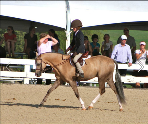 breakfastofreservechampions:  princessponyy:  Love this pony!!! He is struttin' his stuff!  Taken by Bonnie St. Charles  Give me it pleaaaaaaase