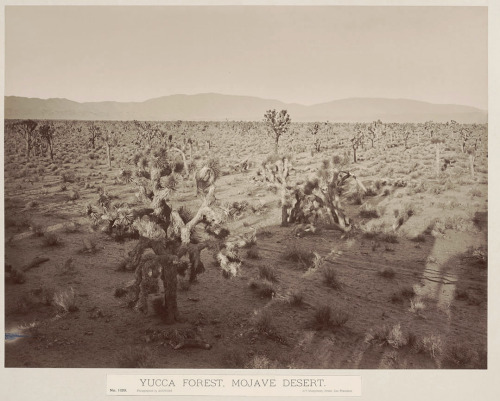 bremser:  Carleton Watkins, Yucca Forest, Mojave Desert, ca. 1880 Read Tyler Green's comparison of early American photography and Mars photography at Modern Art Notes.  This is a great topic, Wayne!