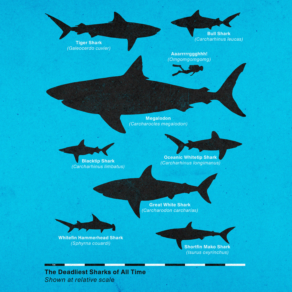 The Deadliest Sharks of All Time (by fatheed)