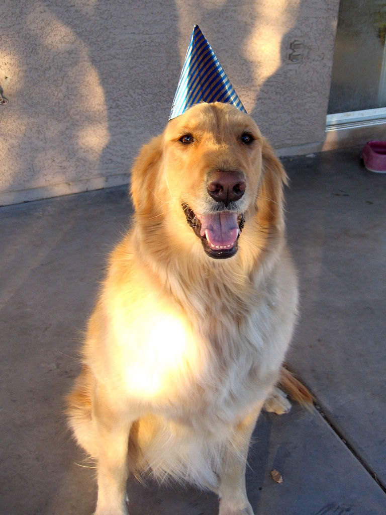 Simba wearing a birthday hat. (by EriQ.)