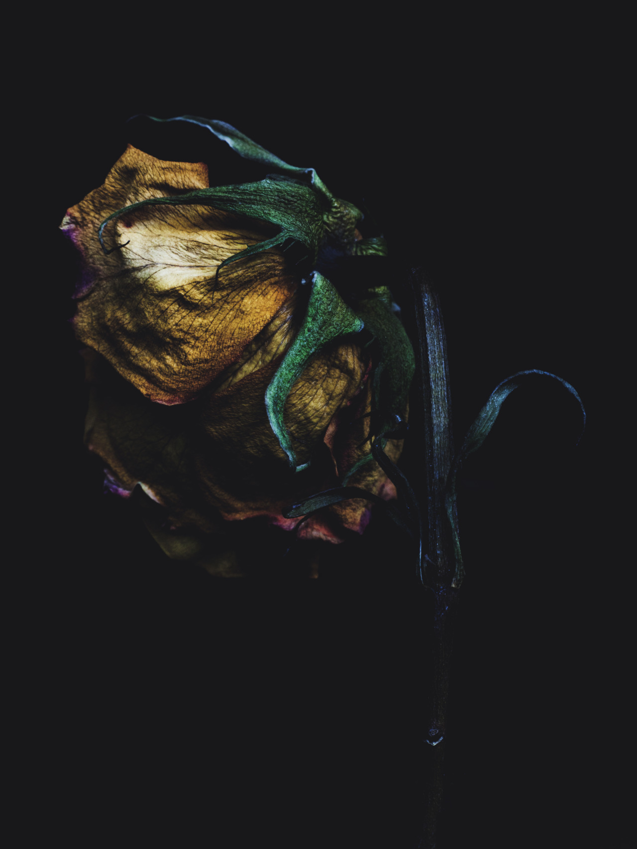 Billy Kidd - Decaying Roses Follow Billy Kidd on Tumblr.